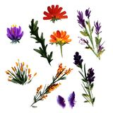 Color set painted in watercolor. Colorful flowers, twigs and leaves. Blanks for design.Isolated white background royalty free illustration