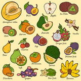 Color set with tropical fruits, vector cartoon stickers Stock Images