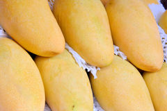 Color and shape of mangoes Stock Images