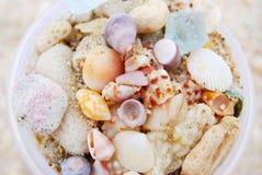 Color shell Stock Photos