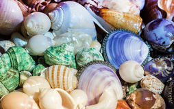 Color of shell from ocean Stock Images
