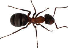 Color single ant isolated on white Royalty Free Stock Photos