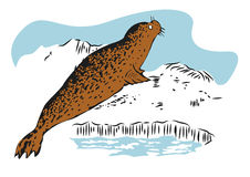 Color sketch of fur seal resting on ice. Hand drawn illustration Royalty Free Stock Photography