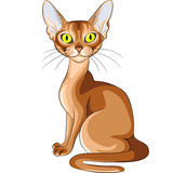 Color Sketch Of The Red Cat Abyssinian Breed Stock Image