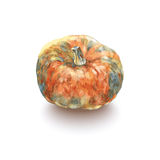 Color sketch  pumpkin on white background.vector illustration Royalty Free Stock Photography