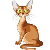 Color skissar av den Abyssinian aveln för den röda katten Fotografering för Bildbyråer