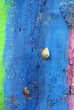 Color snail. Snail and color tree Royalty Free Stock Photos