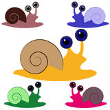 Color snail on white background Stock Image