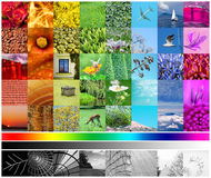 Color Spectrum. Colored and black and white pictures forming the whole color spectrum Royalty Free Stock Image