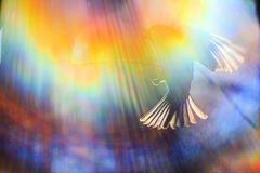 Color spectrum and a sparrow in flight Stock Photography