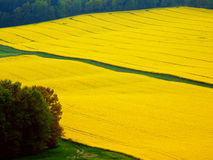 Color spring photography of rape fields Stock Photos