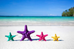 Color starfishes on sandy beach Stock Photo