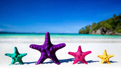 Color starfishes on sandy beach Royalty Free Stock Images