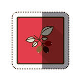 Color sticker silhouette in square frame with coffee tree branch Stock Photos