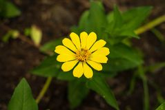 beautiful bright yellow flowers and green leaves with blurry background stock photos