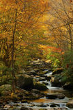 Color surrounds a small quiet stream. Fall in the Smoky Mountains along a quiet stream Stock Images