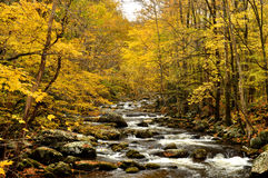 Color surrounds a small quiet stream. Stock Photography