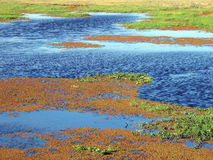 the swamps and prairie in Kenya Stock Photography