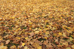 Color texture autumn leaves of trees Stock Image