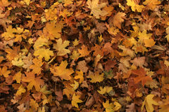 Color texture autumn leaves of trees Royalty Free Stock Photos