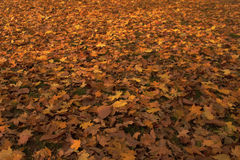 Color texture autumn leaves of trees Royalty Free Stock Photo