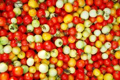 Color of tomato Royalty Free Stock Photography