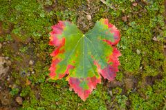 Color transformation of a leaf, green to red Royalty Free Stock Photos
