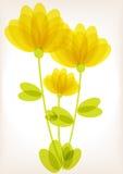Color transparent flowers illustration Stock Image