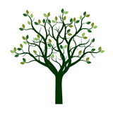 Color Tree with Leaves. Vector Illustration. Royalty Free Stock Photography