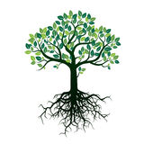 Color Tree and Roots. Vector Illustration. Stock Image