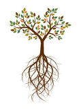 Color Tree and Roots. Vector Illustration. Royalty Free Stock Photo