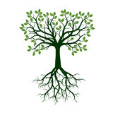 Color Tree with Roots. Vector Illustration. Royalty Free Stock Image