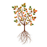 Color Tree and Roots. Vector Illustration. Royalty Free Stock Photos