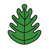 Color tropical leaf botany nature style. Vector illustration royalty free illustration