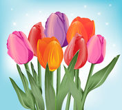 Color tulips. Colored tulips with blue sky background stock illustration