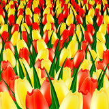 Color tulips. Against a dark background royalty free illustration