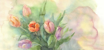 Color tulips in vase watercolor Stock Photos