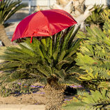 Color umbrella and decorative palm at central round square in Eilat Stock Image