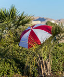 Color umbrella and decorative palm at round square in Eilat Royalty Free Stock Photos