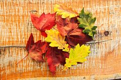 Color variation of leaves Royalty Free Stock Image