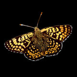 Color vector butterfly Royalty Free Stock Image