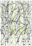 Color vector illustration of spring birch trees forest. Royalty Free Stock Photography