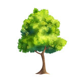 Color Vector Tree Stock Photo