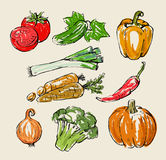 Color vegetables Stock Image