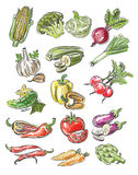 Color vegetables Stock Photography
