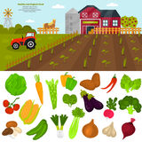 Color vegetables icons set. Farming color illustration for web and mobile design Stock Image