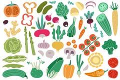 Color vegetables. Tomato zucchini potatoes champignon garlic radish. Vegan healthy meal organic food delicious vegetable. Vector doodle collection vector illustration