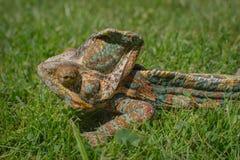 Color verde de la naturaleza de la toma del camuflaje del camaleón Foto de archivo