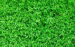 Color verde del fondo horizontal de las hojas Imagen de archivo