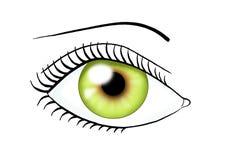 Color verde del ojo ilustración del vector
